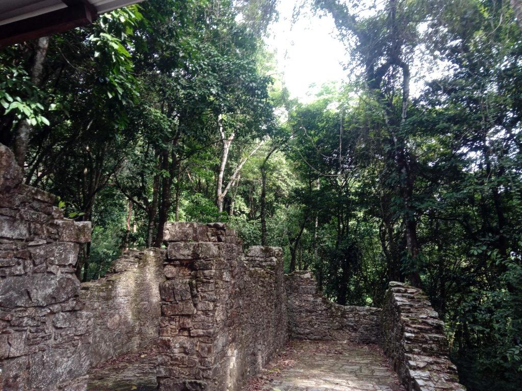 jungle-site-archéologique-Palenque