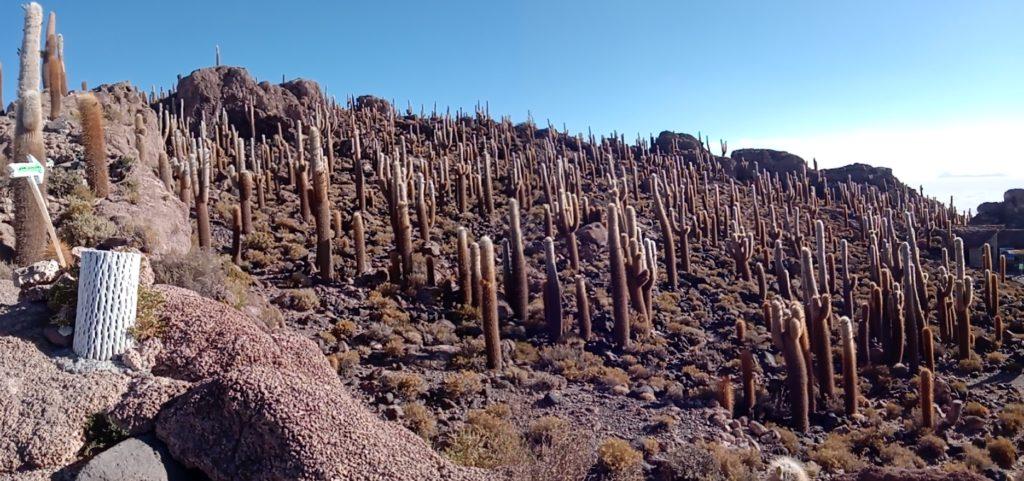 cactus-desert-uyuni-ile-coralienne